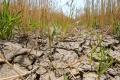 Extrémne sucho trápi poľnohospodárov prevažne na juhu a západe SR