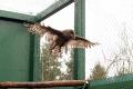 Vo Vysokých Tatrách postavili rozlietavaciu voliéru pre vtáky