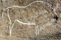 V severnom Španielsku objavili jaskynné rytiny staré 14.500 rokov