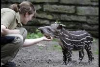Ten život zvierací