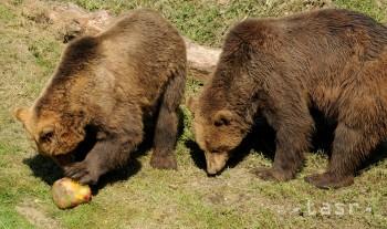 Pri prvom jarnom sčítaní napočítali na Poľane 37 medveďov