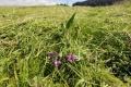 Peľ tráv spôsobí alergikom v najbližších dňoch komplikácie