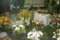 Kvetinárske a záhradnícke umenie na Flóre Bratislava 2018