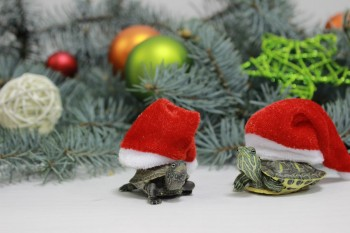 Psychologická pomoc bude online aj počas Vianoc