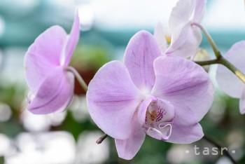 Botanická záhrada UPJŠ v Košiciach predstaví orchidey z celého sveta
