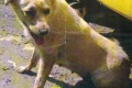 Hľadá sa majiteľ týraného psa: Fenku zavrel do kufra a hodil do smetí