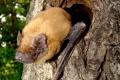 Košická zoo pripravila program počas Medzinárodnej noci netopierov