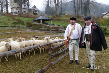 Chov oviec v SR a ČR za priemerom EÚ a aj sveta výrazne zaostáva