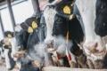 V Nemecku sa uskutoční mliečny summit, jeho závery sú nejasné