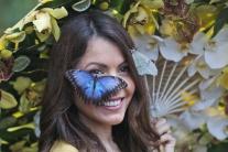 Motýle všade, kam len pozriete