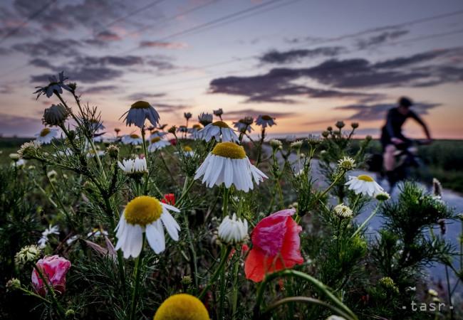 Aj v Dubnici nad Váhom vznikne kvetinová lúka