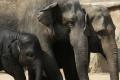 Páchatelia použili kyanid na usmrtenie slonov v Zimbabwe