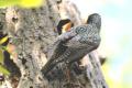 Mnohé vtáky sú citlivé na vyrušenie pri hniezdení, potrebujú pokoj