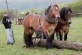 V Lučenci sa stretli furmani. Pretekalo sedem konských záprahov