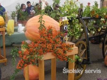 Výstavka ovocia a zeleniny v ZŠ Kráľovský Chlmec
