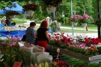 Žilina Budatínsky park kvety predaj kaktusy