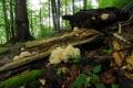 Národný park Poloniny navštívil kvôli Európskemu diplomu expert