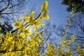 Jar v rozpuku: Polooblačné počasie budú sprevádzať príjemné teploty