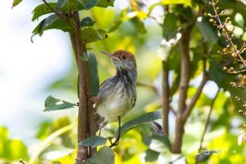 V hlavnom meste Phnom Pénh vedci objavili nový vtáčí druh