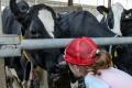 Na Svetový deň školského mlieka mliekari odmenia šikovných školákov
