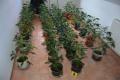 Úlovok maďarských colníkov: Vyše 17 kilogramov marihuany v aute