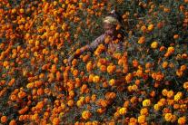 Stratená v kvetoch