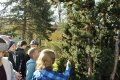 Poznávanie drevín v teréne