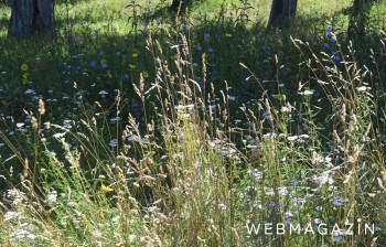 Zdravie: Najsilnejším alergénom týchto dní sú lipnicovité trávy
