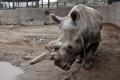 V bratislavskej zoo vysychajú vodné plochy, hrozí úhyn zvierat