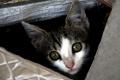 V Bratislave minulý rok ošetrili a vykastrovali 1158 túlavých mačiek