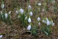 VIDEO: Pod Strážovskými vrchmi sa objavili poslovia jari