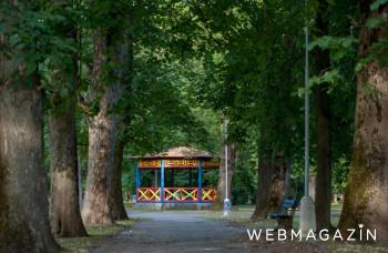 Tuje a smreky v banskobystrickom parku nahradí 47 nových stromov