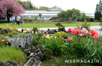 Nedele v Botanickej záhrade v Košiciach patria koncertom