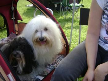 Keď chov psov prináša nielen radosť, ale  i úspechy