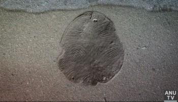 Botanická záhrada UPJŠ predstaví unikátne objavy paleontológov