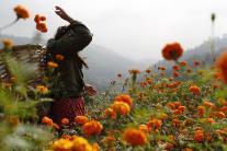 Hinduistický sviatok Tihar