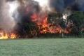 Taliansko: Študenti musia za lesný požiar zaplatiť pokutu 27 miliónov