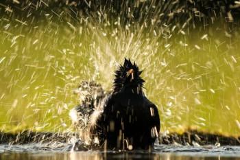 V horúcom počasí vtákom pomôžete napájadlom, stačí aj miska