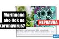 HOAX: Marihuana neobsahuje účinné látky proti koronavírusu