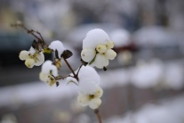 V Poprade napadol sneh