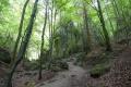 V Novej Bani otvorili Záhradný les s drevinami z celého sveta