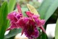 VIDEO: V Botanickej záhrade SPU v Nitre rozkvitli orchidey